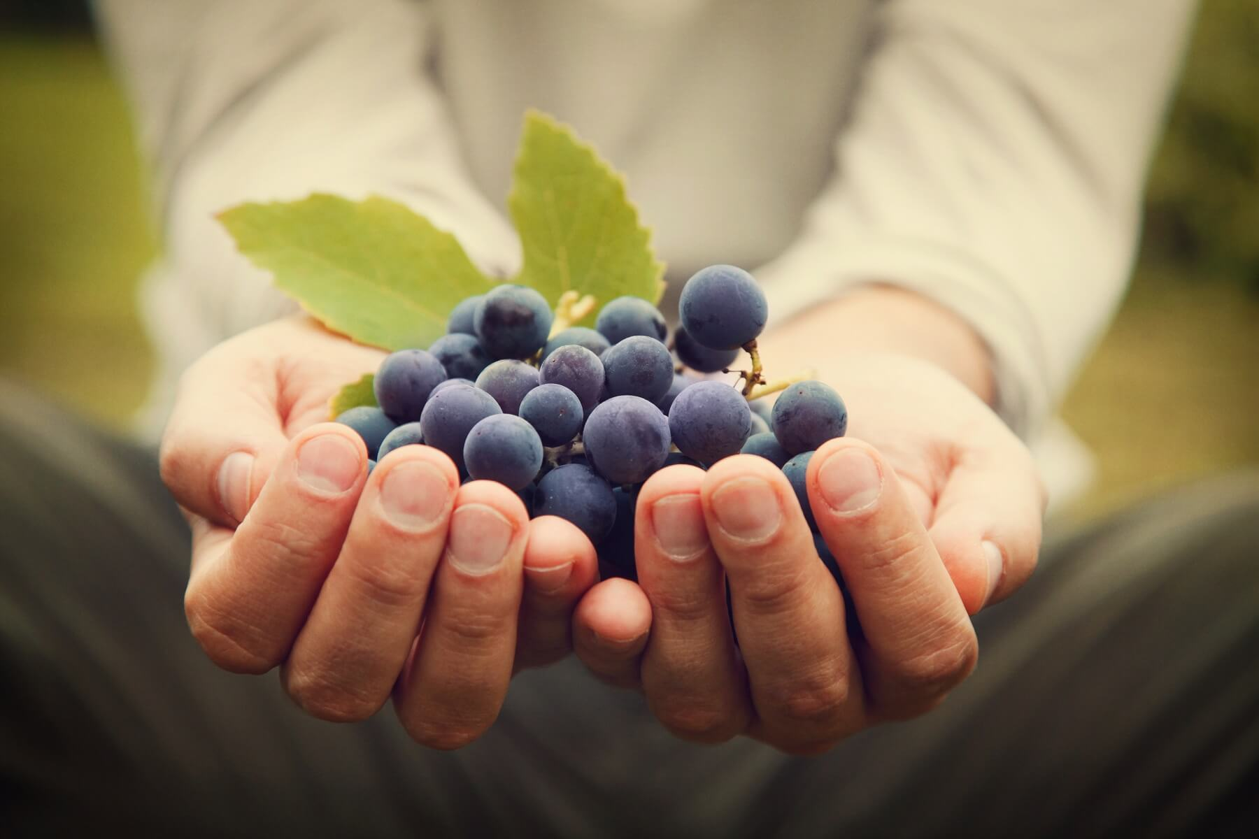Grape Skin: What It Does, and Why It Matters