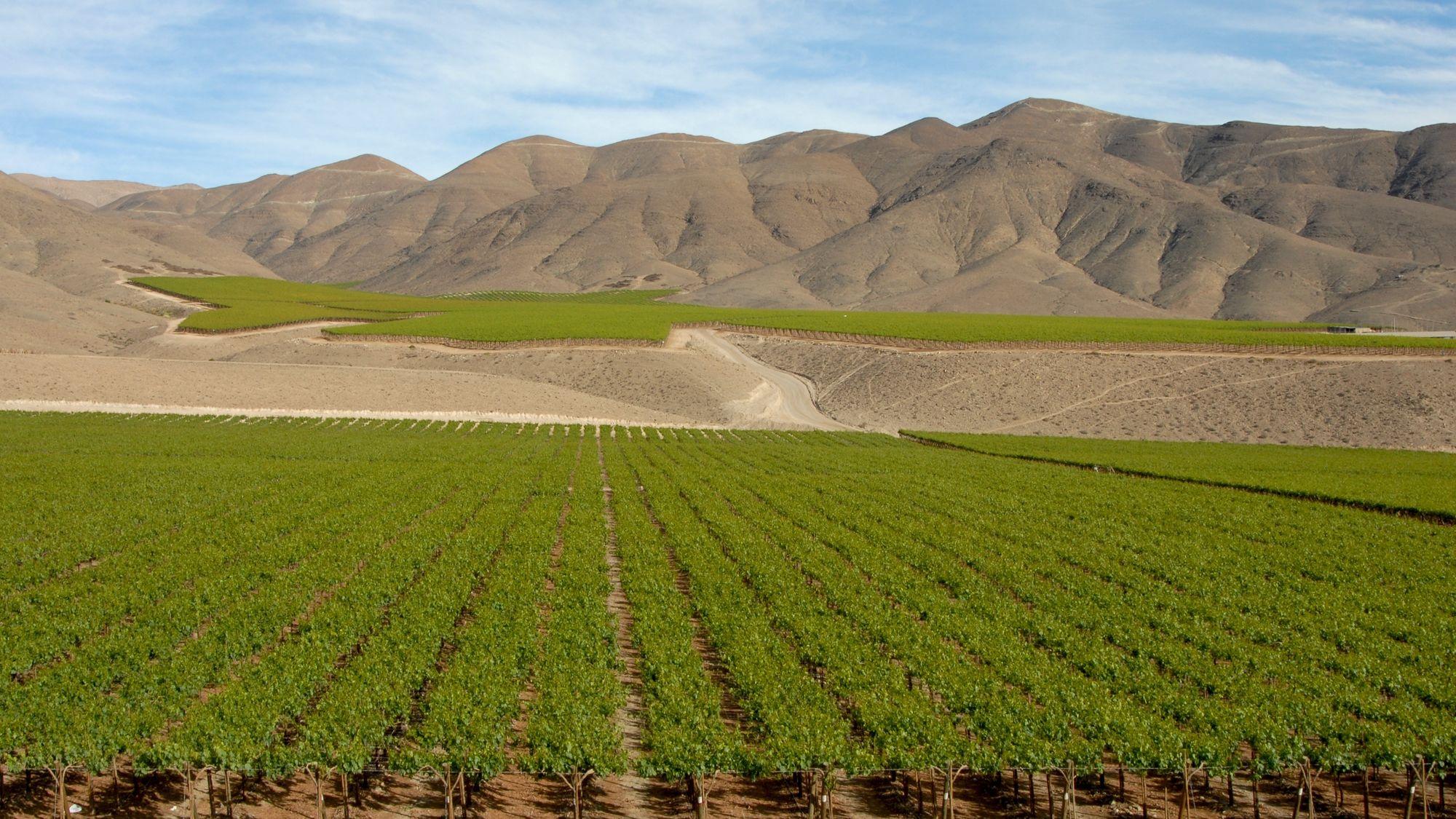 MaxPixel.net-Landscape-Wine-Andes-Chile-970444